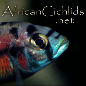 AfricanCichlids.net on Facebook